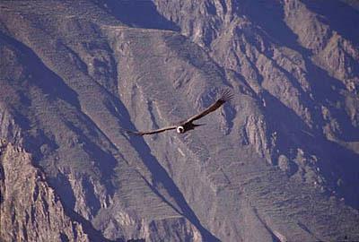 самая большая птица - фото
