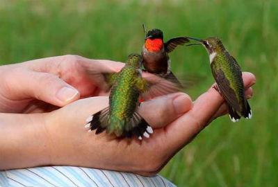 Птички колибри