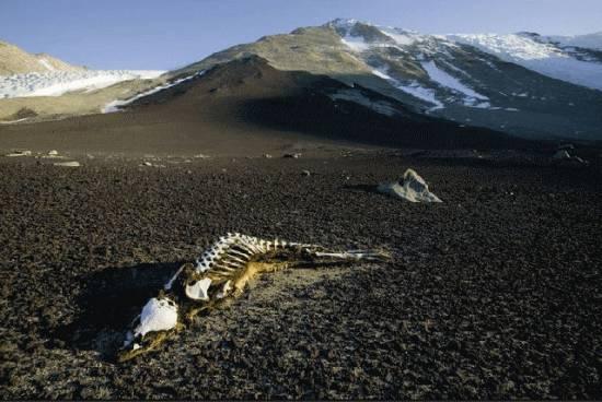Сухие долины в Антарктиде