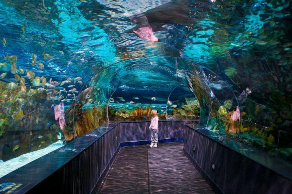 Аквариум L'Oceanografic в Валенсии