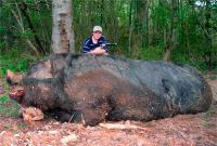 самые большие в мире кабаны