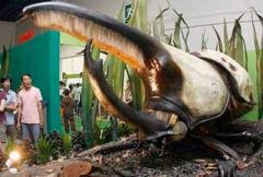 самый большой жук в мире - фото