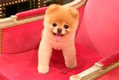 самые милые собаки в мире