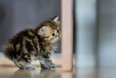 Маленький пушистый котенок
