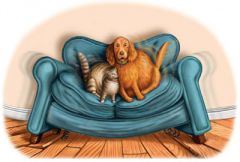 Собака и кот на диване