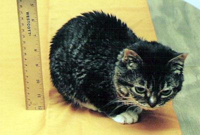 Самые маленькие кошки в мире