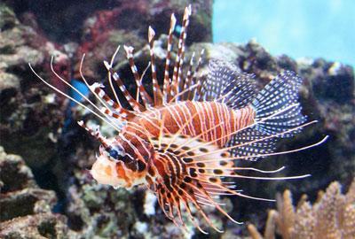 самая опасная рыба в мире - фото