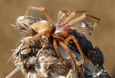 самый страшный паук в мире