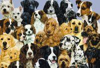 Собаки разных пород