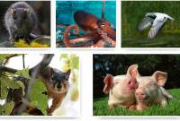 Умные животные