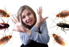 Страх перед тараканами