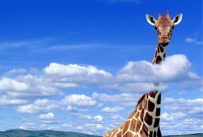 Жираф выше облаков